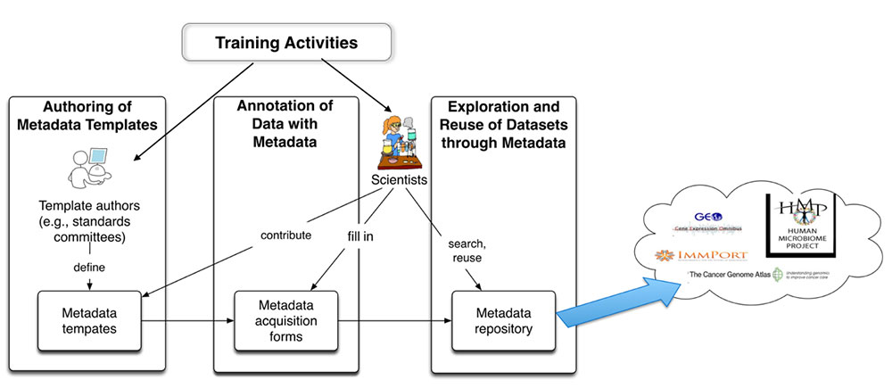 Diagram showing availability of training activities in different stages of metadata creation process
